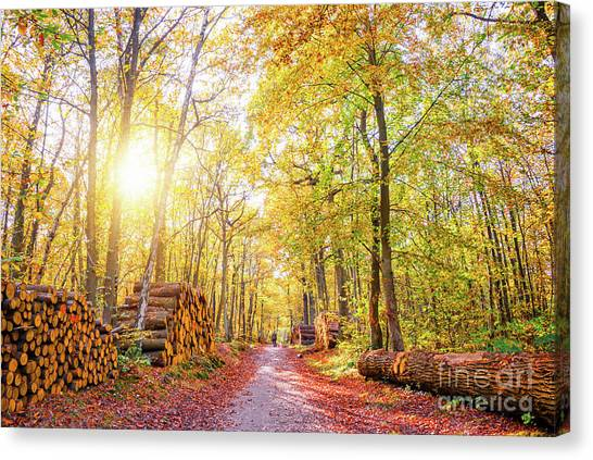 Forest Paths Canvas Print - Sunny Autumn by Delphimages Photo Creations