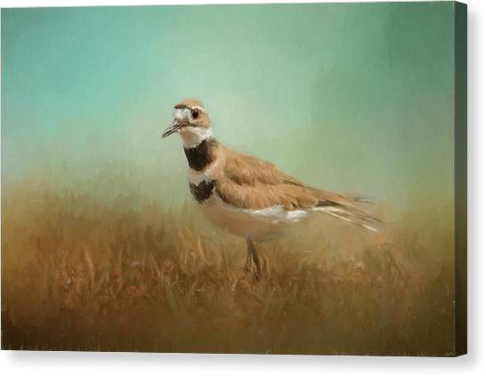 Killdeer Canvas Print - Sunny Day Stroll by Jai Johnson
