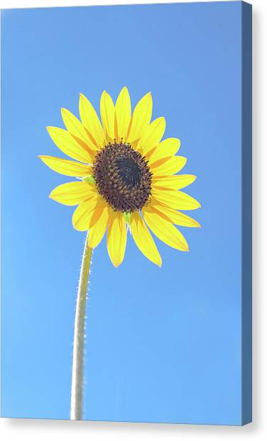 Sunny Delight Canvas Print