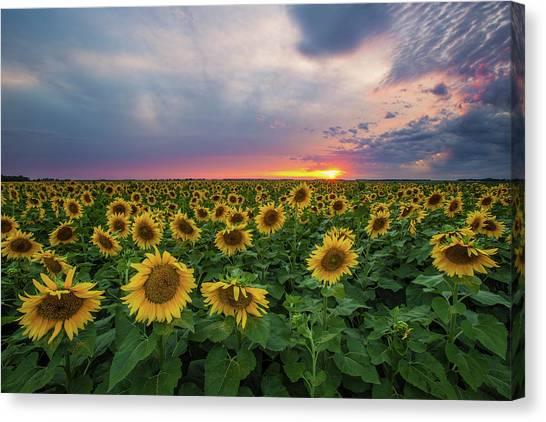 South Dakota Canvas Print - Sunny Disposition  by Aaron J Groen
