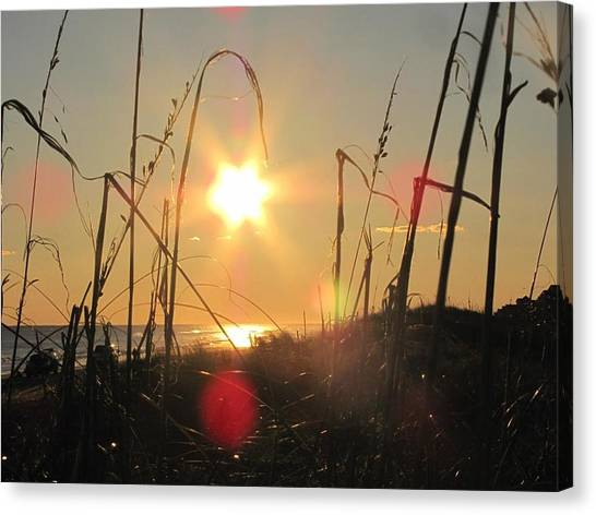 Trout Canvas Print - Sunny Dunes by Laura Henry