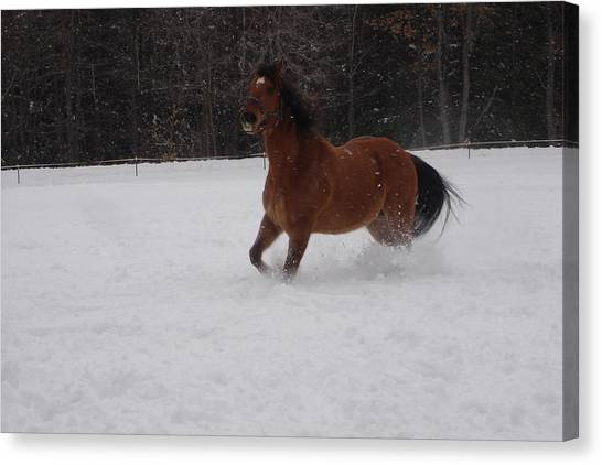 Canvas Print - Sunny Running In 12 Inches Of Fresh Snow by Jeffrey Koss