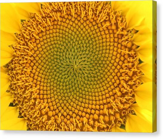 Sunny Swirl Canvas Print