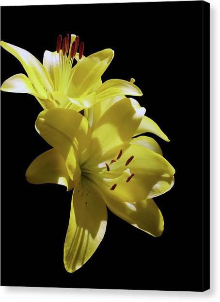 Sunny Yellow Lilies Canvas Print