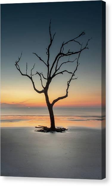 Sunrise And A Driftwood Tree Canvas Print