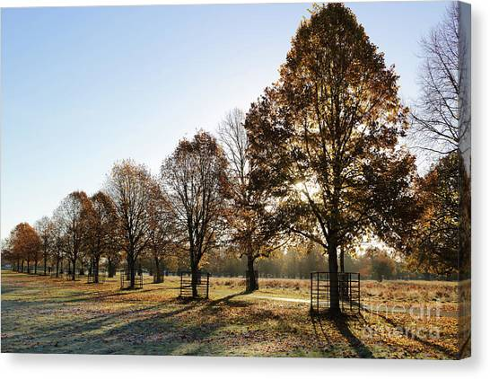 Sunrise And Long Shadows Canvas Print