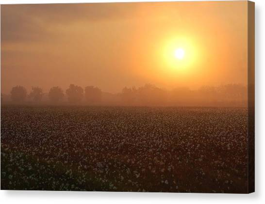 Sunrise And The Cotton Field Canvas Print