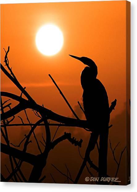 Canvas Print - Sunrise Anhinga by Don Durfee