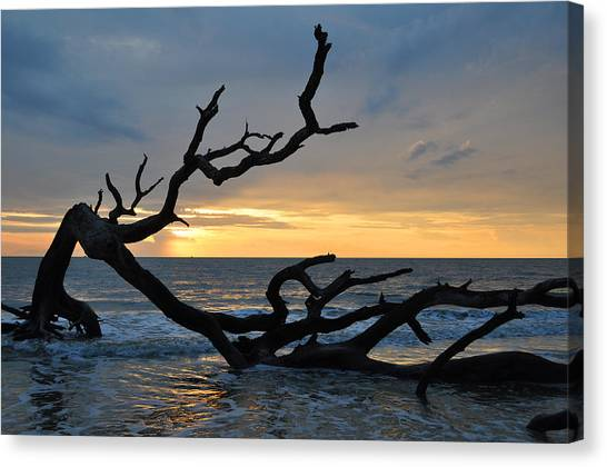 Sunrise At Driftwood Beach 1.2 Canvas Print