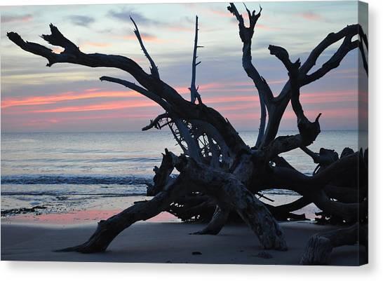 Sunrise At Driftwood Beach 5.1 Canvas Print
