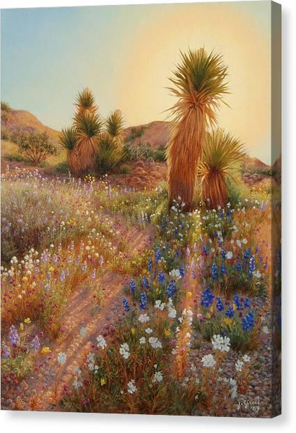 Desert Sunrises Canvas Print - Sunrise At Joshua Tree by Johanna Girard