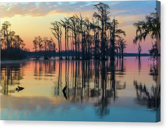 Sunrise, Bald Cypress Of Nc  Canvas Print