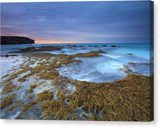 Pennington Bay Canvas Print - Sunrise Beneath The Storm by Mike  Dawson