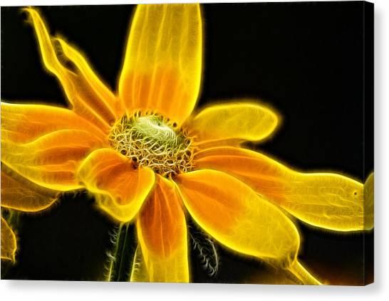Sunrise Daisy Canvas Print