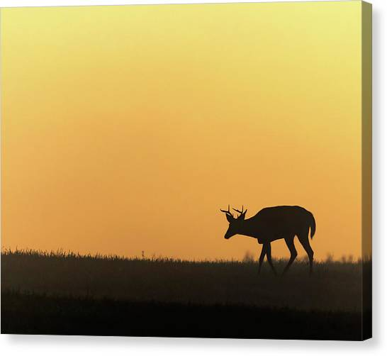 White-tailed Deer Canvas Print - Sunrise Deer by Bill Wakeley