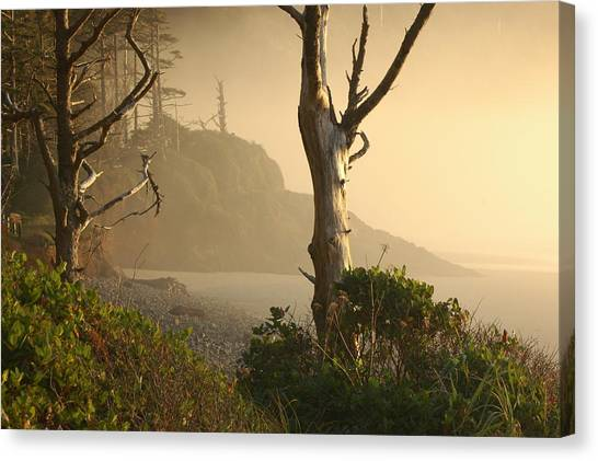 Sunrise Haze Canvas Print by Lori Mellen-Pagliaro