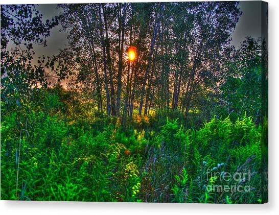 Sunrise In The Swamp-4 Canvas Print by Robert Pearson