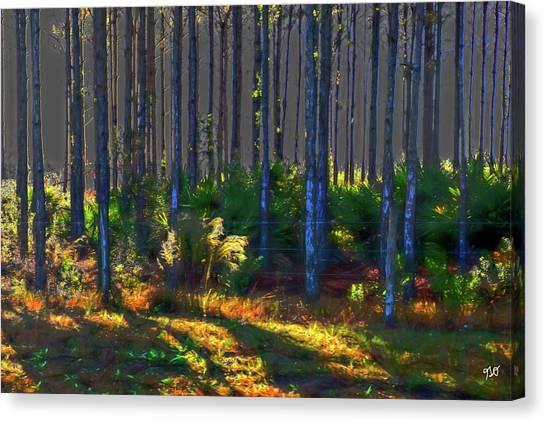Sunrise On Tree Trunks Canvas Print