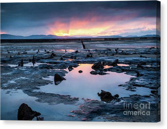 Sunrise Over The Bronze Age Sunken Forest At Borth On The West Wales Coast Uk Canvas Print