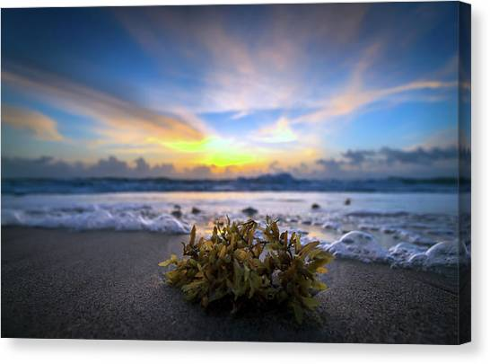 Sunrise Shoreline Canvas Print