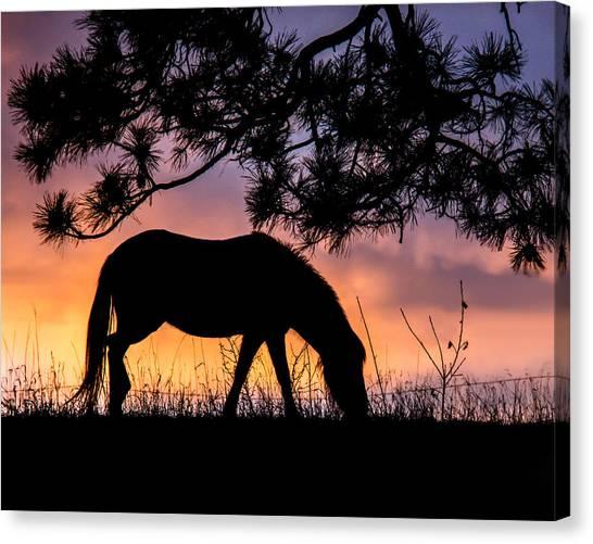 Sunrise Silhouette Canvas Print