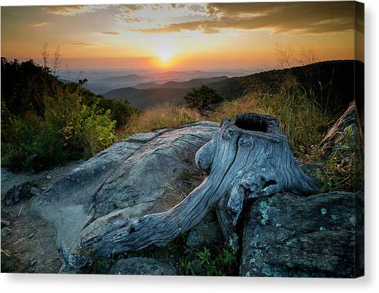 Sunrise Stump Canvas Print