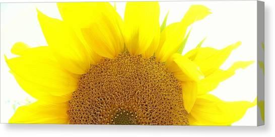 Sunflower Sunrise Canvas Print