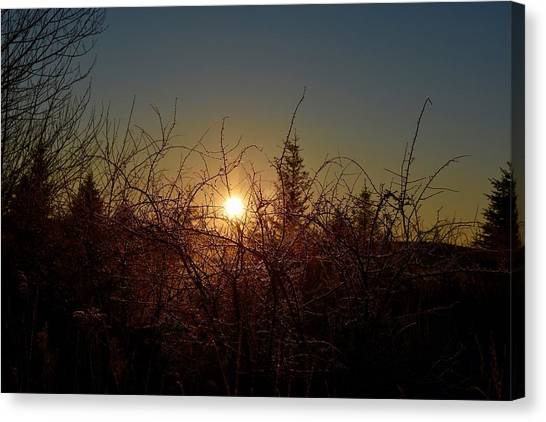 Sunrise Thru The Brush Canvas Print