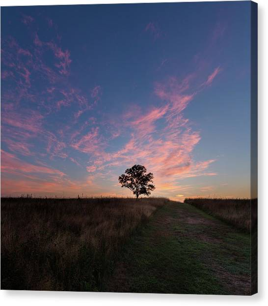 Sunrise Canvas Print - Sunrise Tree 2016 Square by Bill Wakeley
