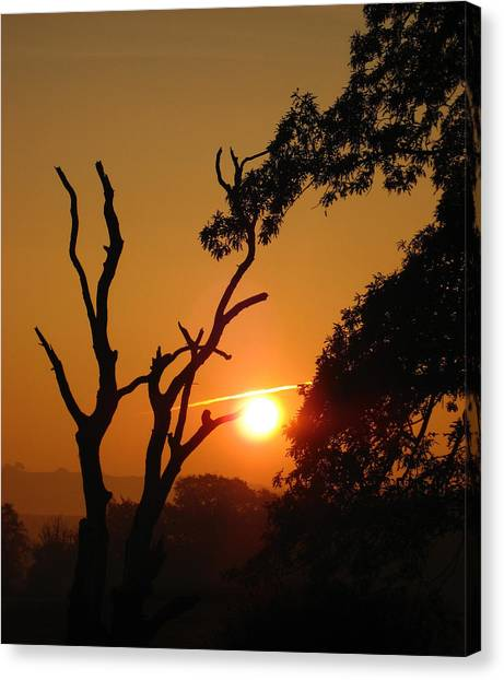 Sunrise Trees Canvas Print
