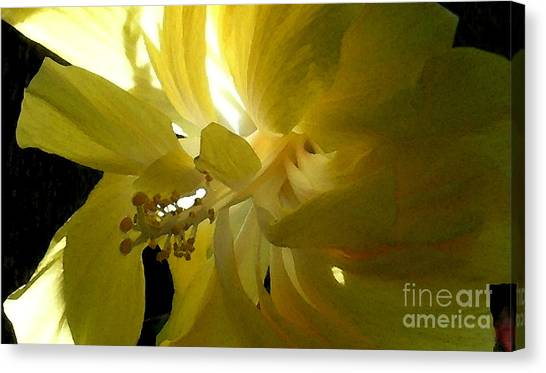 Suns Glare Canvas Print by James Temple