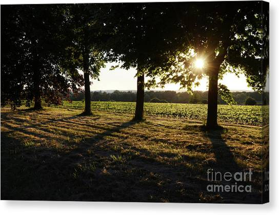 Sunset Along Elgin Mills Road-2 Canvas Print