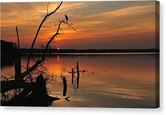 Canvas Print featuring the photograph Sunset And Heron by Angel Cher