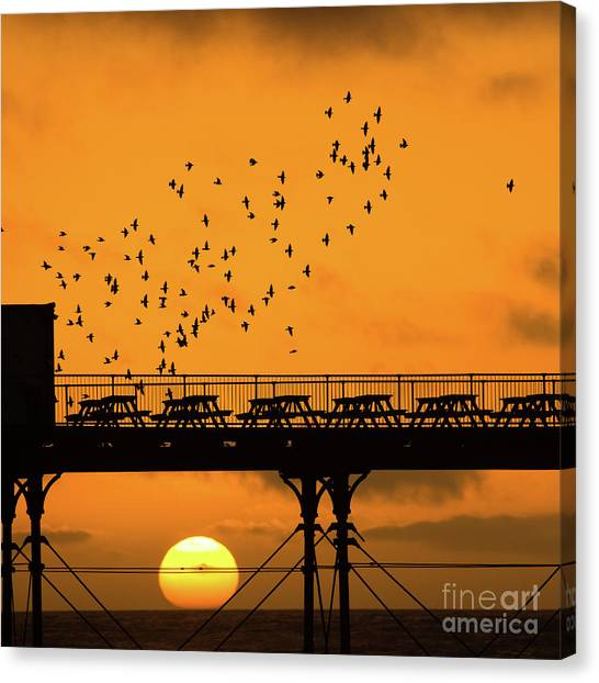 Sunset And Starlings In Aberystwyth Wales Canvas Print
