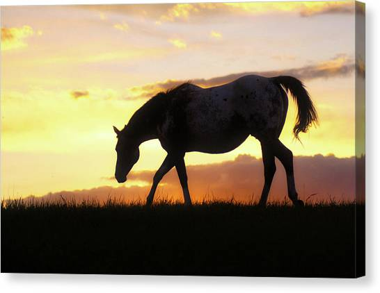 Sunset Appy Canvas Print