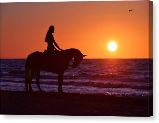 Sea Horse Canvas Print - Sunset by Artur Baboev