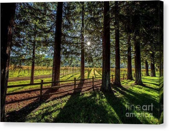 Sonoma Valley Canvas Print - Sunset At Far Niente by Jon Neidert