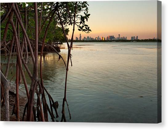 Sunset At Miami Behind Wild Mangrove Forest Canvas Print by Matt Tilghman