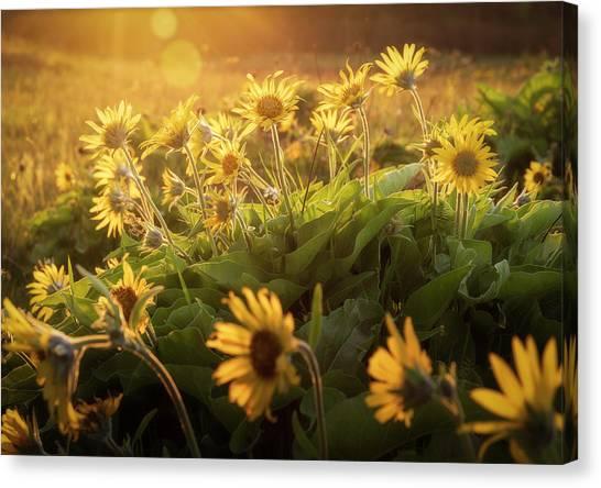 Sunset Balsam Canvas Print
