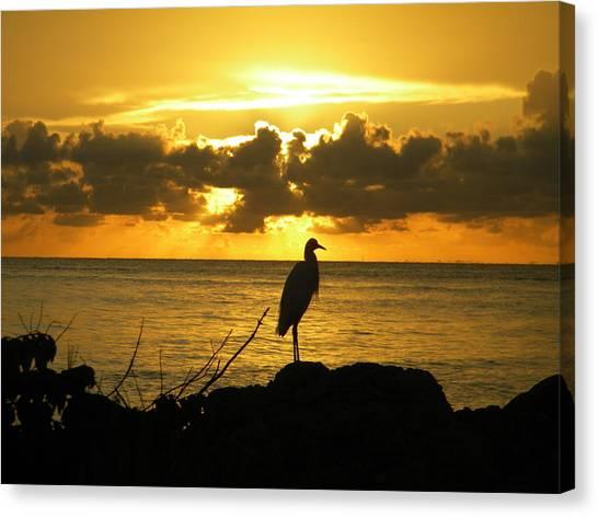 Sunset Bird Canvas Print