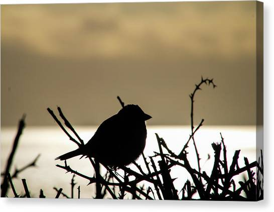 Sunset Bird Silhouette Canvas Print