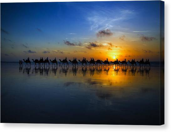 Sunset Camel Ride Canvas Print by Louise Wolbers