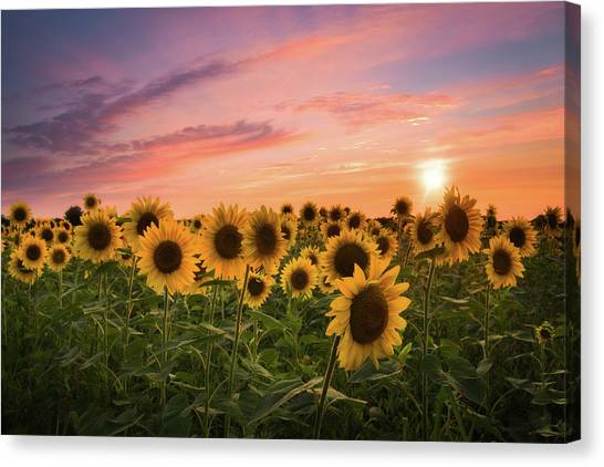 Sunset Choir Canvas Print