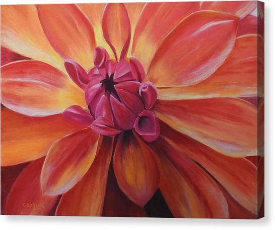 Sunset Dahlia Canvas Print