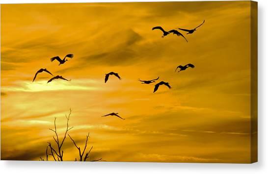 Sunset Fliers Canvas Print