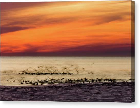 Sunset Flock Canvas Print