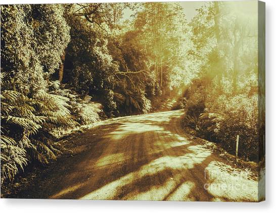 Driving Canvas Print - Sunset Forest Drive by Jorgo Photography - Wall Art Gallery