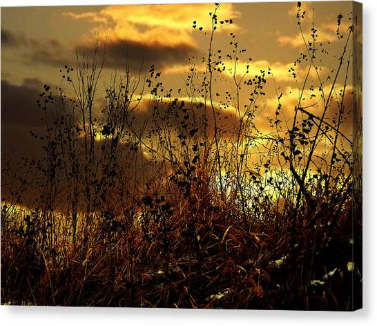 Sunset Grasses Canvas Print
