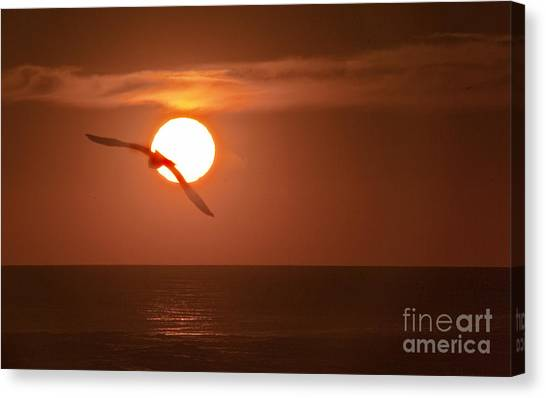 Sunset Gull No.1 Canvas Print by Scott Evers