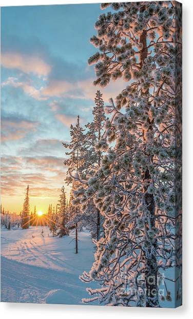 Winter Scenery Canvas Print - Sunset In Lapland by Delphimages Photo Creations